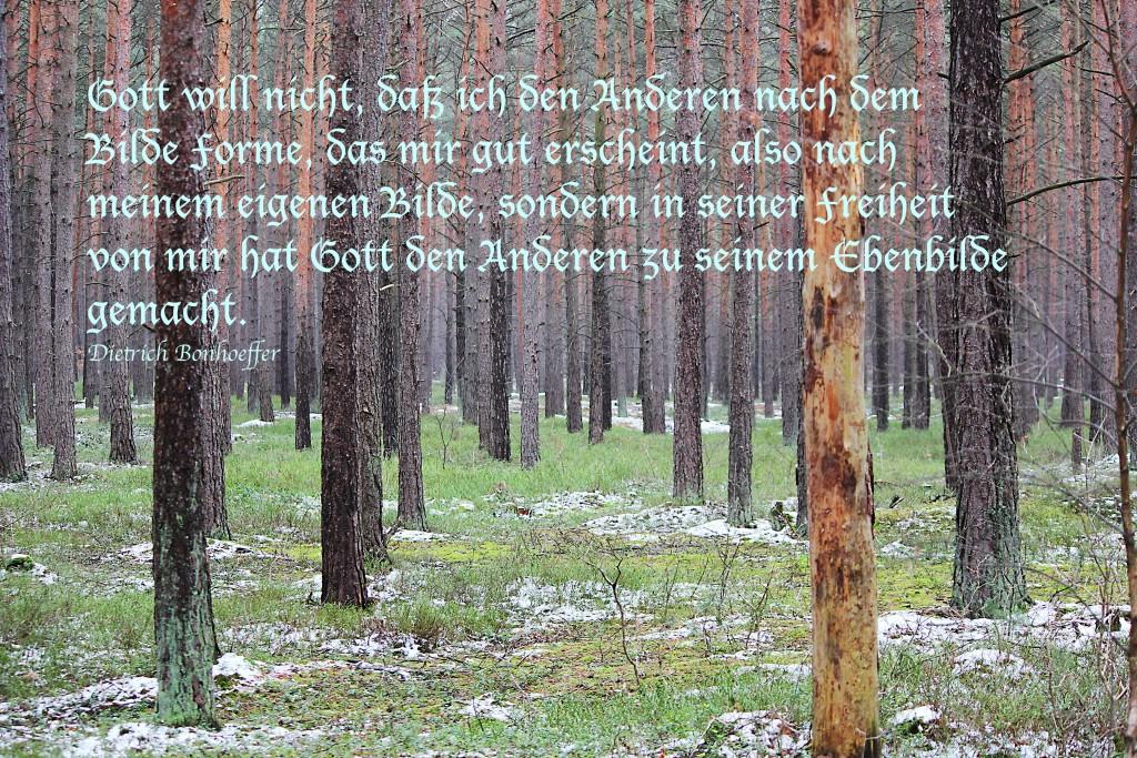 Wald mit Text: Gott will nicht, daß ich den Anderen nach dem Bilde Forme, das mir gut erscheint, also nach meinem eigenen Bilde, sondern in seiner Freiheit von mir hat Gott den Anderen zu seinem Ebenbilde gemacht.